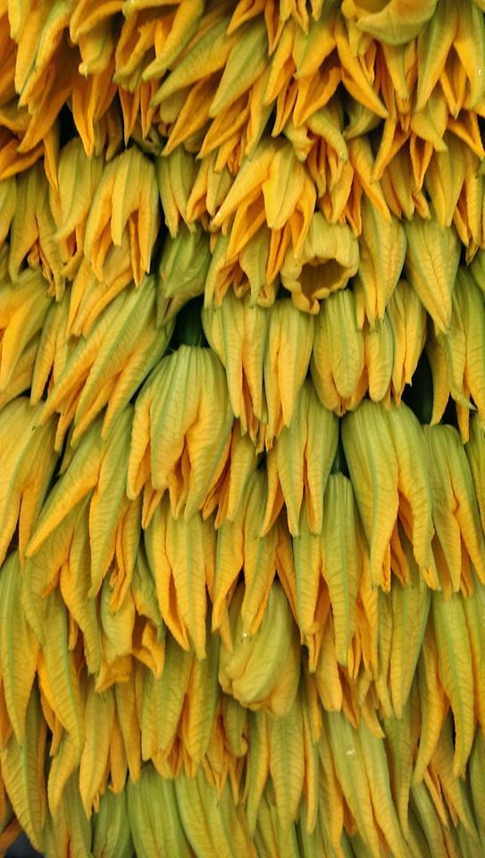 Beautiful Courgette en Fleur