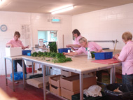 The Girls Bunching Herbs for Deliveries