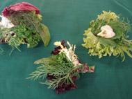 Radicchio Salad Cups